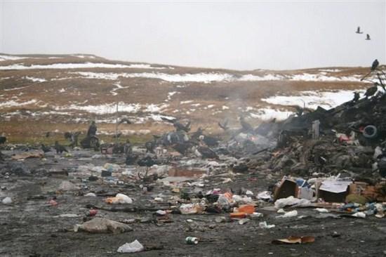 Eagles.at.alaska.dump